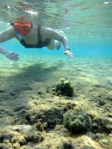 snorkeler in shallow water near a poisonous stonefish in the Red Sea