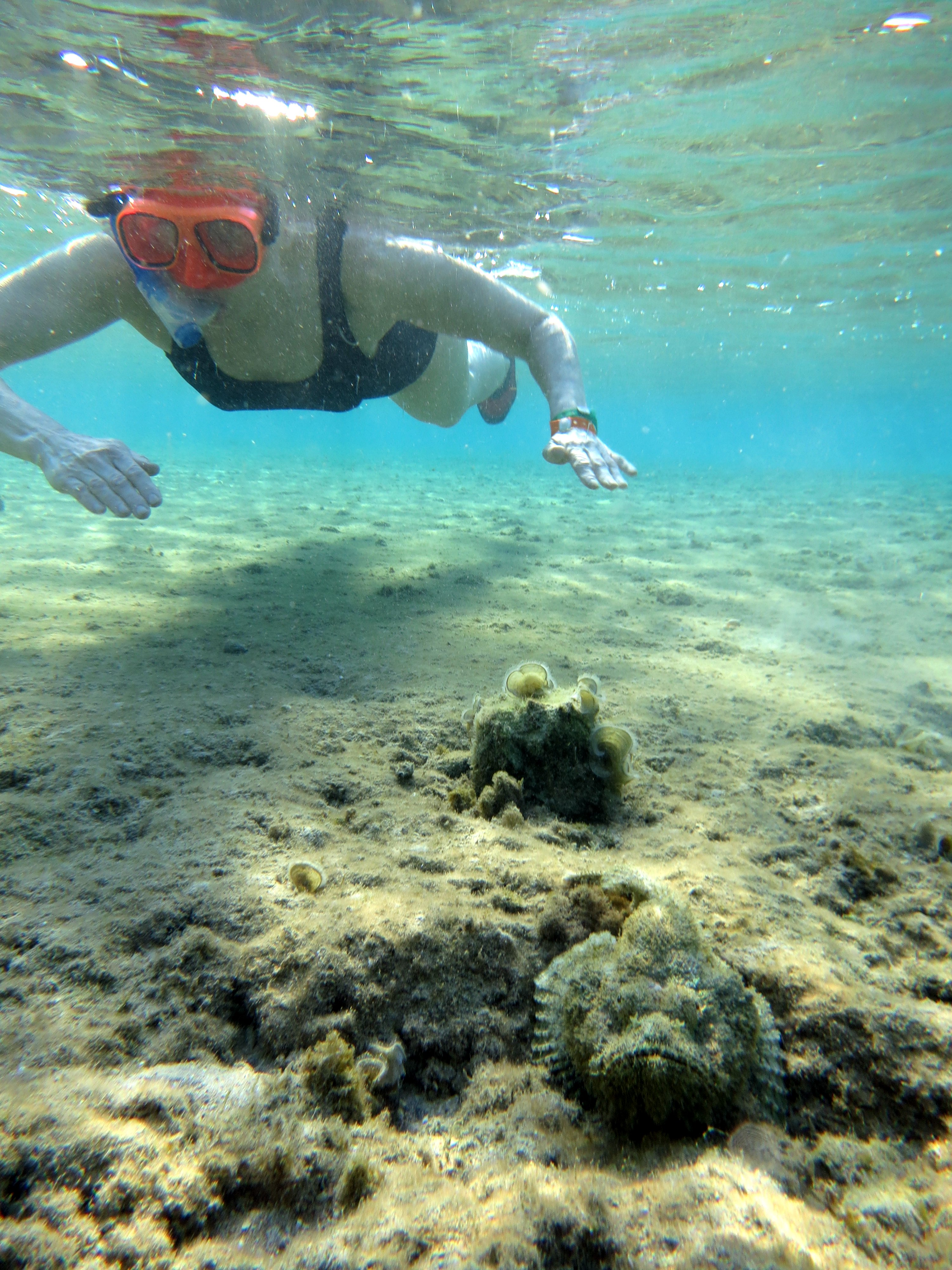 Red sea snorkeling top 5 for Red sea fish