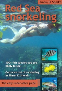 book about snorkeling in the Red Sea