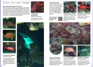 sample pages from the Red Sea snorkeling guide book