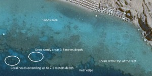 how to see the corals from the satellite images in the Red Sea