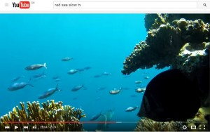 click here to see Reef Slow-TV on Youtube