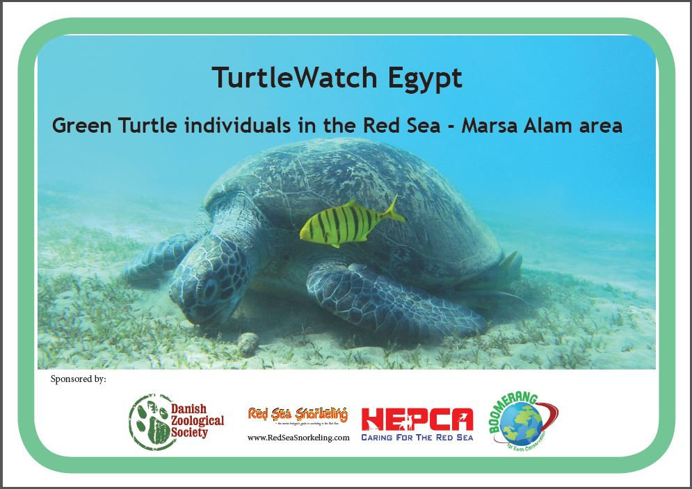 TurtleWatch Egypt - Green Turtles of the Red Sea - Marsa Alam region