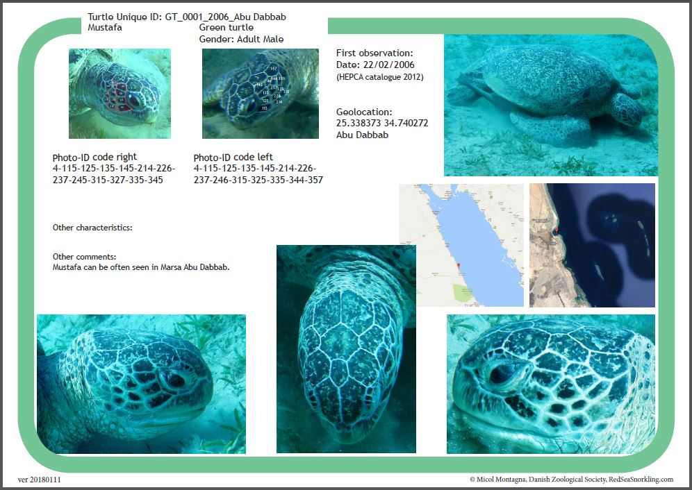Green Turtle catalogue. - showing individual turtles in observed in the Marsa Alam region of the Red Sea