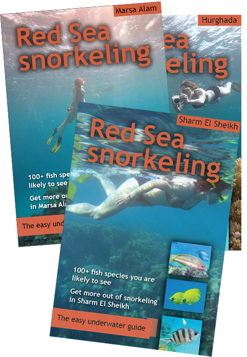 e-book Red Sea snorkeling - the easy underwater guide to the fish in Sharm El Sheikh, Hurghada and Marsa Alam
