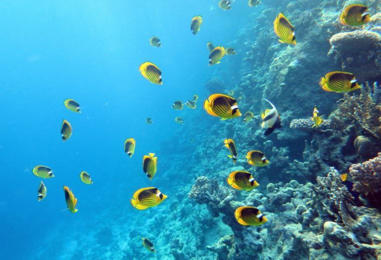 Sharm El-Sheikh provides many options to go snorkeling in really nice places