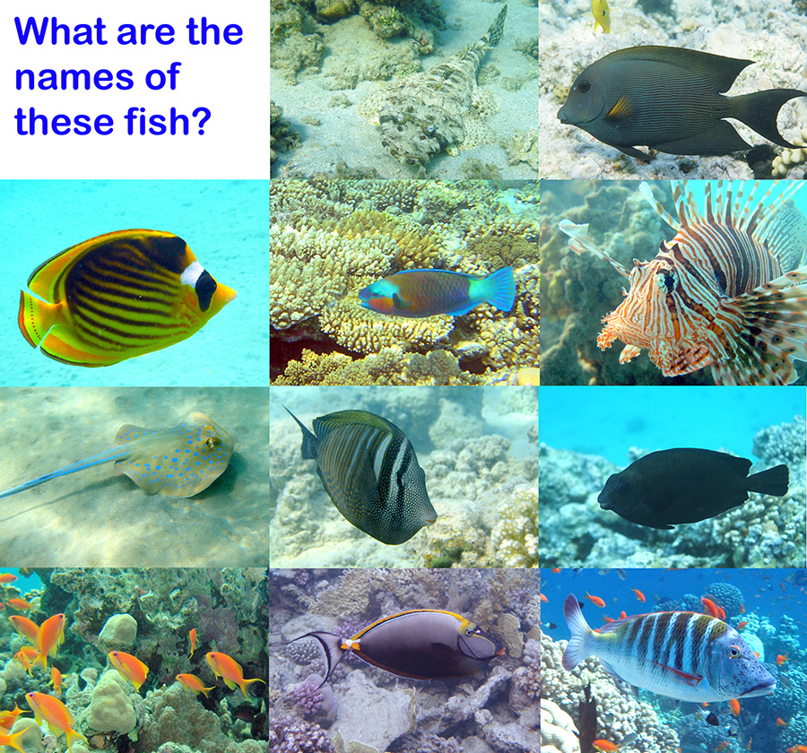 please take the survey and let us know what name you have for these fish species found in the Red Sea